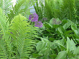 Fern and Allium - Eddington House Inn, North Bennington Village in scenic Southern Vermont